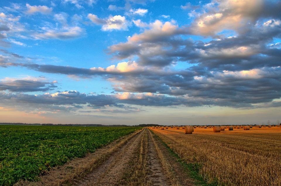 Utilizzazione fanghi di depurazione in agricoltura